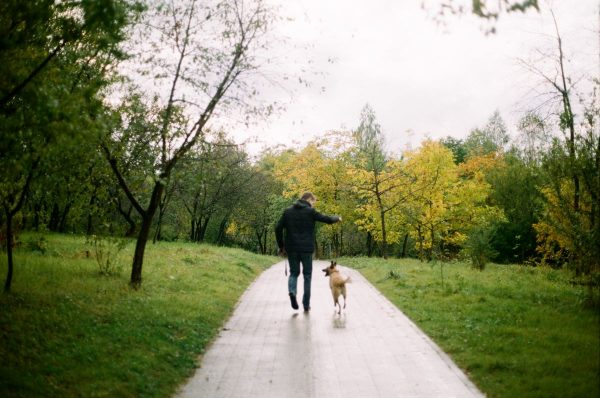 man walking a dog among green trees